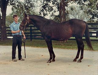 Gallant Man British-bred Thoroughbred racehorse