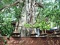 Gangaramaya Temple - panoramio (7).jpg