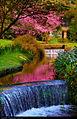 Garden (5626897326).jpg
