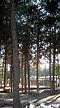 Garden of Pine - West of Omar Khayyam Tomb - Nishapur 03.JPG