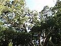 Gardenology.org-IMG 1064 rbgs10dec.jpg