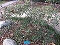 Gardenology.org-IMG 2561 ucla09.jpg