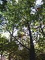 Gardenology.org-IMG 2632 ucla09.jpg