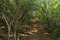 Gfp-florida-keys-long-key-state-park-darkened-forest-path.jpg