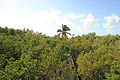 Gfp-florida-keys-long-key-state-park-looking-at-the-forest-canopy.jpg