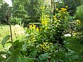 Giardino botanico di Brera (Milan) 166.jpg