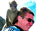 Gibraltar Barbary Macaque on a tourist 2.jpg