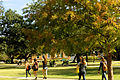 Gibson Quad in early autumn (5182772304).jpg