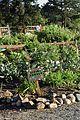 Giving Garden (16750567106).jpg