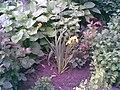 Gradinita cu flori - panoramio.jpg