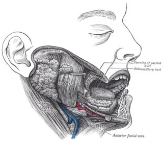 Submandibular duct