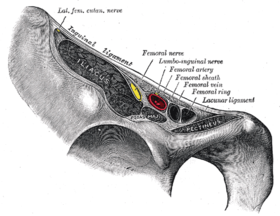 Structures passing behind the رباط أربي. (Femoral artery labeled at upper right.)