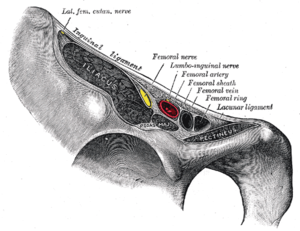 Femoral sheath - Structures passing behind the inguinal ligament.