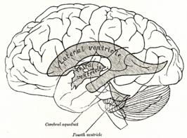 3e ventrikel