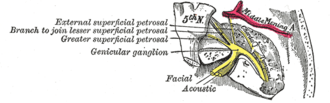 Geniculate ganglion - The course and connections of the facial nerve in the temporal bone.