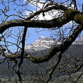Grindelwald - panoramio (2).jpg
