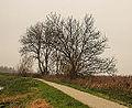 Groep essen (Fraxinus excelsior) aan fietspad om Langweerderwielen (Langwarder Wielen). Oostkant 03.jpg