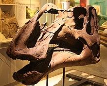 Gryposaurus - Wikipedia