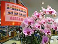 HK Jordan YHCPE Yue Hwa Chinese Products Emporium 1st Pastry Fectival Taiwan pink flowers Sept-2012.JPG