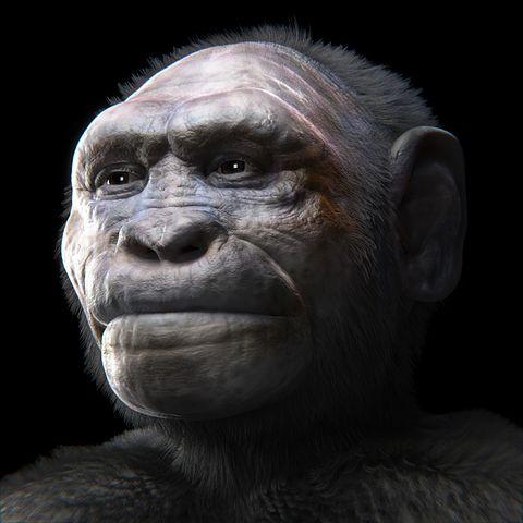 Recreación forense de cráneo de Homo georgicus procedente de Dmanisi