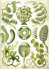 les types des plantes