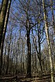 Hajnówka, Poland - panoramio (234).jpg