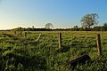 Halverde Naturschutzgebiet Kreienfeld 03.JPG