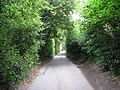 Hampers Lane narrows to a single track road - geograph.org.uk - 1426579.jpg