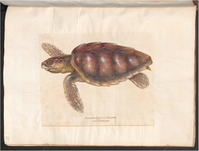 Hans Verhagen den Stommen - Drawing of a sea turtle.pdf