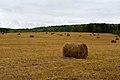 Hay-rolls-magansk-krasnoyarsk-krai-19-september-2010.jpg