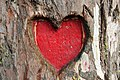 Heartin symbol in tree of Yercaud.jpg