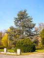 Heppenheim-Bergstr Arboretum 007.jpg