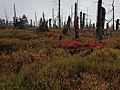Herbst im Woid.jpg