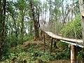 Heritage forest of Loleygaon, Darjeeling, West Bengal.jpg