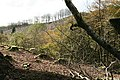 High Bray, logging at Sherracombe - geograph.org.uk - 266457.jpg