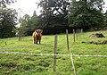Highland laddie, Rochdale Road, Sowerby - geograph.org.uk - 561647.jpg