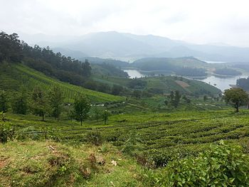 Hill Station- Ooty.jpg