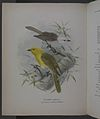 History of the birds of NZ 1st ed p102-2.jpg