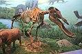 Hohhot.inner mongolia museum.Platybelodon grangeri.2.jpg
