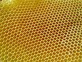 Honeycombs-rayons-de-miel-2.jpg