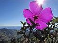 Horizonte em flor.JPG