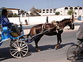 Horse drawn caleche (2845554134).jpg
