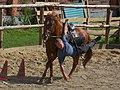 Horse riding (6132258917).jpg