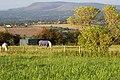 Horses grazing on Mellor Moor - geograph.org.uk - 547233.jpg