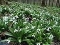 Hulbyshche (Botanical Preserve)3.jpg