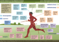 Human Running Adaptations.png
