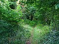Humbie Wood - geograph.org.uk - 42455.jpg