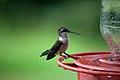 Hummingbird (6238229098) (2).jpg