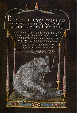 Joris Hoefnagel - A sloth