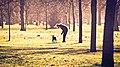Hyde Park (15210041473).jpg